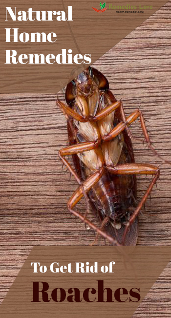 natural home remedies to get rid of cockroaches remedies lore. Black Bedroom Furniture Sets. Home Design Ideas