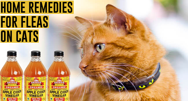 Home Remedies For Fleas On Cats Remedies Lore